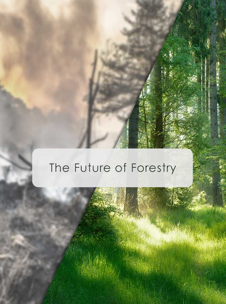 The Future of Forestry